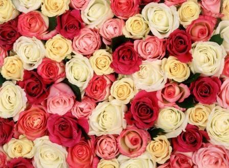 Valentine congratulations!